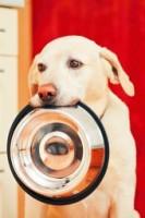 Dog With Bowl E8d6a387b48db8efbff686b0fe54d227