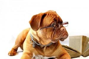 Dog With Glasses E8f96c00b3b2b53e98418770538f9c36