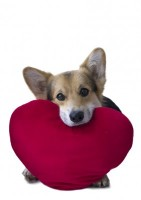 Dog With Heart 5a1634864ffb774f4c9a4b7d4be7a5a9