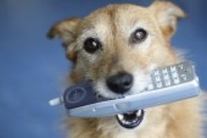 Dog With Phone 88df2260e6309f9078ec66f5b504788a