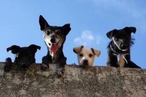 Dogs Looking 4d0afbd5a73506c58ecf12b927b16d9a