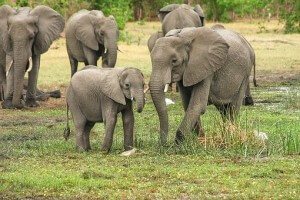 Elephant 2923917340 8d3c0c532f62ed32cdcd0148c2d2f7c5