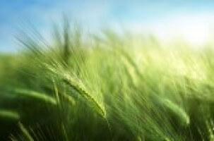 Grass Seeds B02e1d161691340cffd29fd588564613