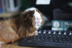 Guinea Pig Computer E1078003bb0d8a170aa3690251b1a17e