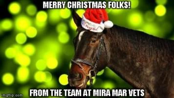 Horse Christmas Meme 30eafdf862d3f298a0551530aaafecd0