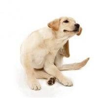 Itchy Dog 1de6efd26164fcc693c0ff7f66a7f2e2