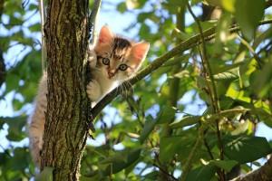 Kitten Tree 4ba6b92d8154dc0ff385f2ccefbf6789