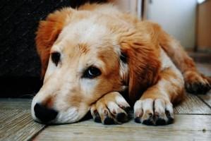 Old Dog Arthritis A01ac7c33568d4d6ff363023e1418b64