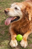 Old Dog Ball Cbc81442f27e626758bafcb6f1b61ccd
