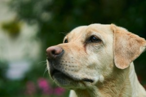Old Dog Cute 3cef28d6e8f8019b658d968c34d71d22