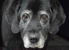 Old Grey Dog 7e01f1ec44f3a38c73163dddf10d5ef0