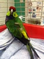 Parrot 2 Dfb542f774e97eb3772b5bf190c45863