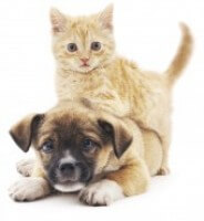 Puppy And Kitten F98b86a2a8a562918838c8c08b6ca318