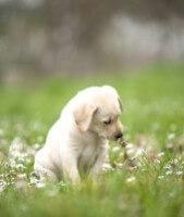 Puppy Flowers E2d0cb23be4811362e5052f9ed2ade00