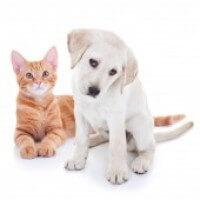 Puppy Kitten B839a8da4e647526374f6e079764e62d