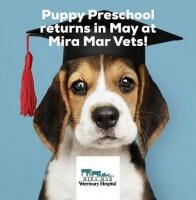 Puppy School Ce315da117b468eb62c582a1cdd0a54b