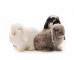 Rabbits 1 36fc615d7736383c4b22db3a853623c0