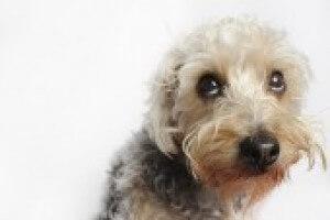 Sad Dog Ea856d6ea0755fe7216824f77bd85f3d