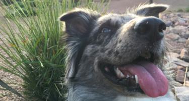 Smiley Dog 81522ee2fcc0c593ba4b5967020ac735