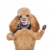 Smiley Dog Bd8b9e572342fc93ccb0b75ddd60e252
