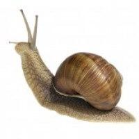 Snail 0d1ec376468b1d6bc7ddad51a7c898c3