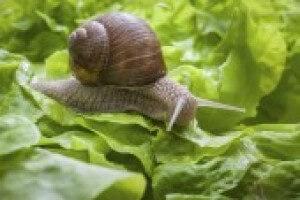 Snail 1 4331d50fbf27574f7100ec4aa2a7e80a