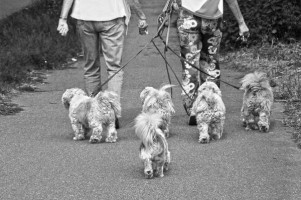 Walking Dogs 1ff0ec38c83842a624219bfe156ca708