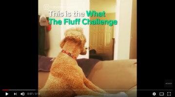What The Fluff 7a702fd6f13e959492516223c552b6d9