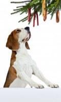 Xmas Dog 10eb19a8005561250f3d2d31719e4b10