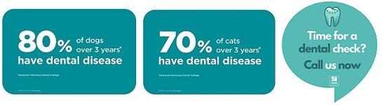 Dental Combo